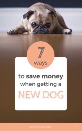 If you're thinking about adding a furry member to your family, consider these 7 tips to save money when getting a new dog.