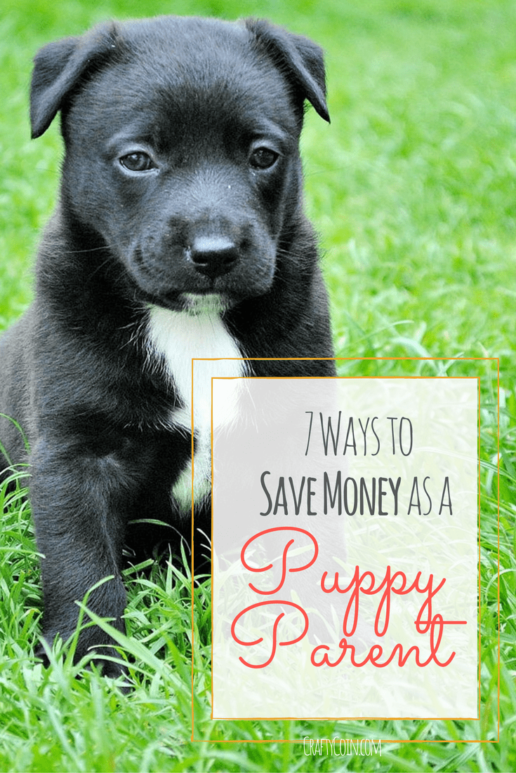 7 Ways to Save Money as a Puppy Parent
